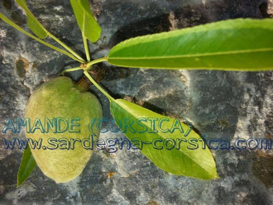AMANDE (CORSICA)%0Awww.sardegna-corsica.com