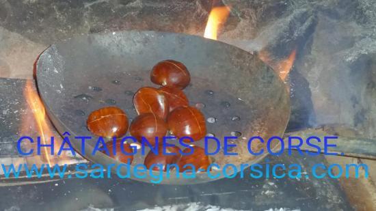 CHÂTAIGNES DE CORSE