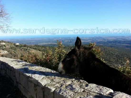Corse âne du village d'Antisanti