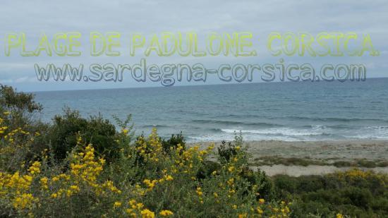 PLAGE DE PADULONE. CORSICA.